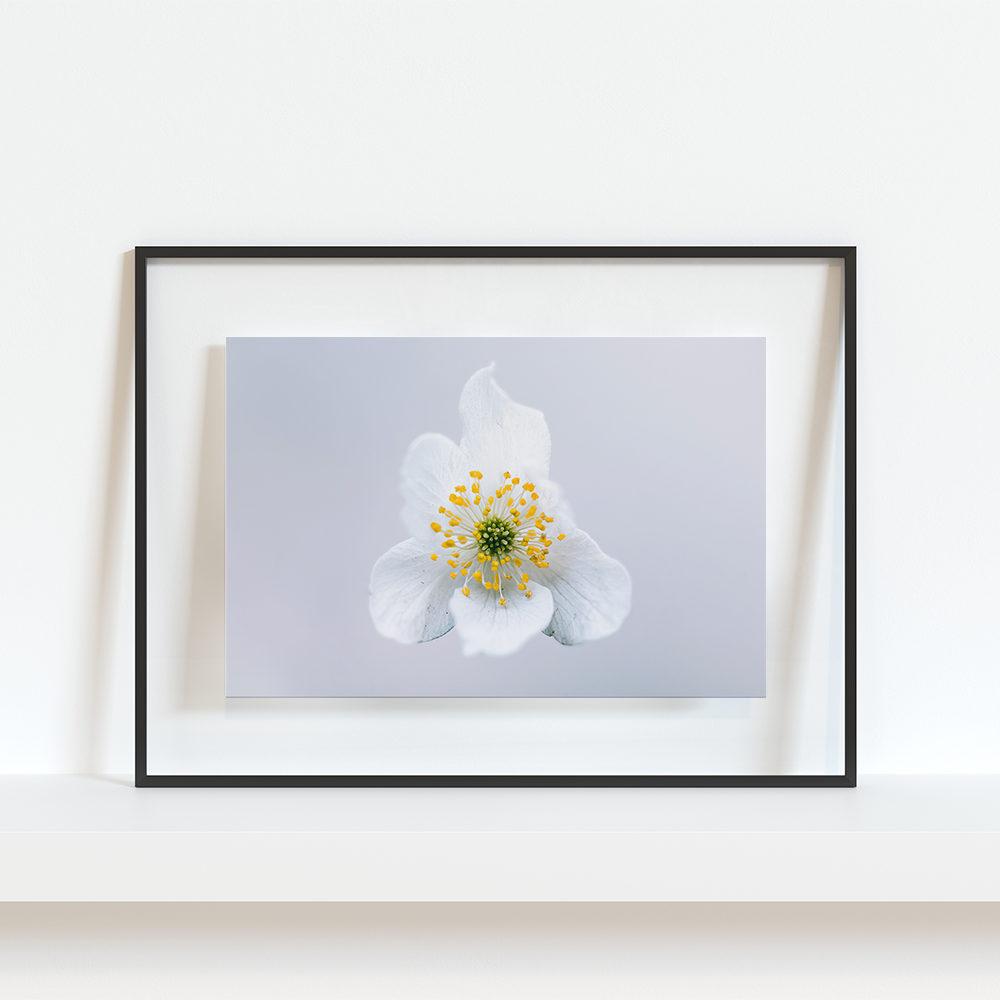 Fleur de jasmin3