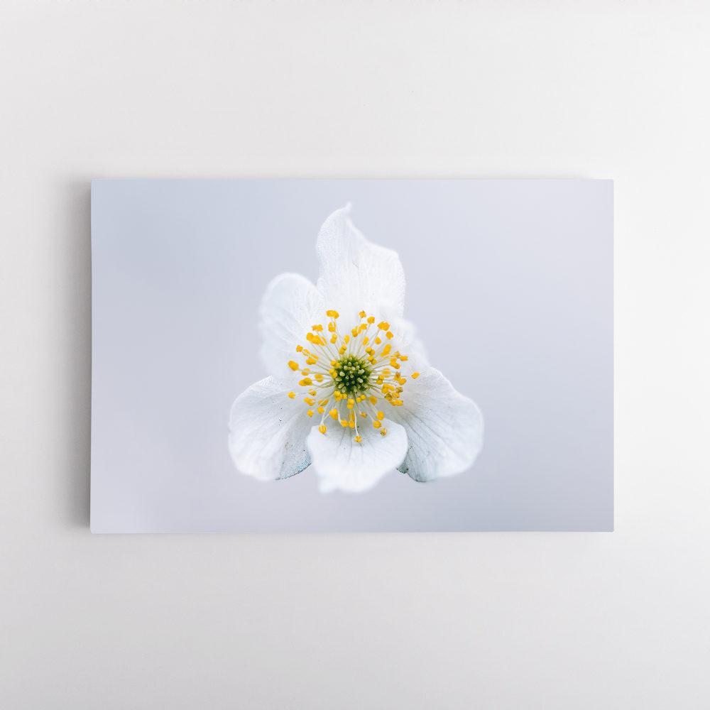 Fleur de jasmin5